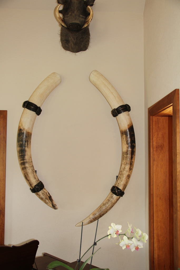 Sculpture Gallery 171 Bronze Elephant Ivory Tusk Holders By